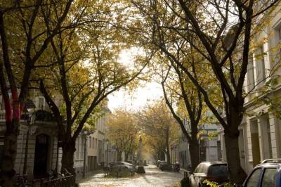 Herbstbild Heerstrasse in Bonn