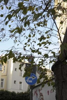 Kirschbluete-bonn-im-november