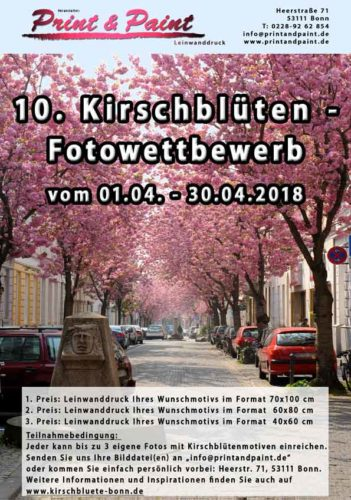 fotowettbewerb-kirschbluete