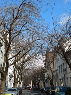 DO-29.03.18-Kirschblüte