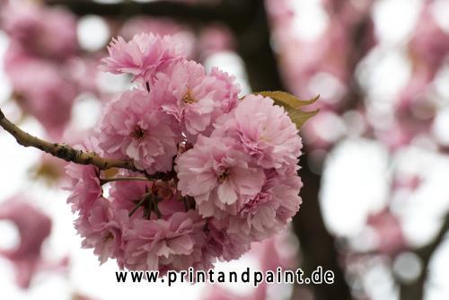 126-Beatrix-Ohlmer-0420_28.04.13_17.37.05.-Bearbeitet-2v3