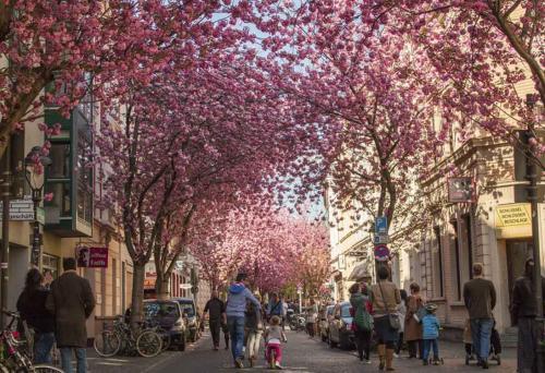 199-2105-Wett-S.Yuqing-Stadt-der-Kirschblüte-3v3