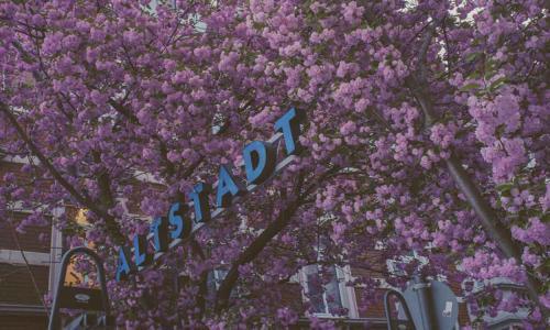 408-2015-Wett-H.Daboul-1002-3v3