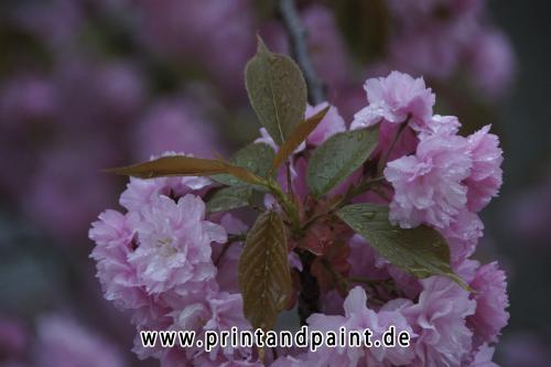 133-Nina-Schoog-blüten_regen-1v3