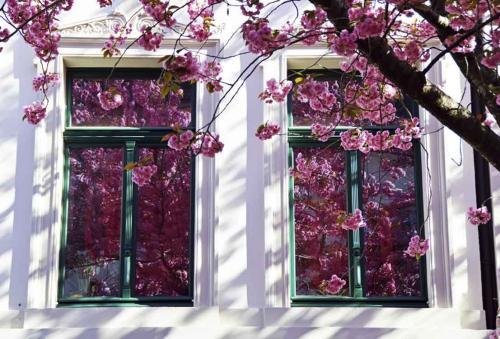 374-2015-Wett-R.Loeffler-Bütenfenster-3v3