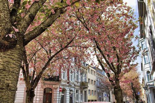 452-2015-Wett-Ch.Klesing-1v3