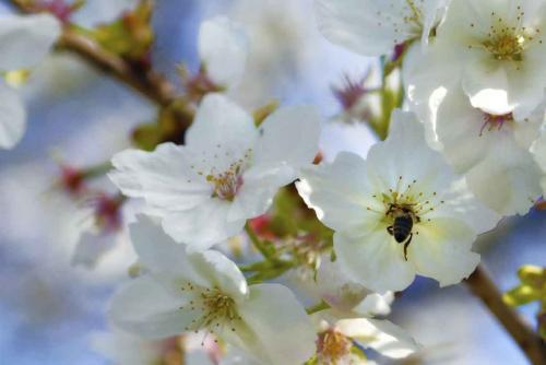 176-2016-Wett.-L.Neubauer-P1350996-Honey bee Larissa Neubauer